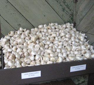 Local-garlic